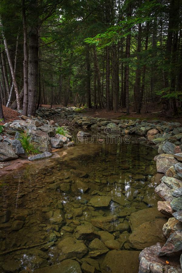 Rock Strewn Stream im Acadia Nationalpark lizenzfreie stockbilder