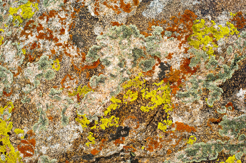 Rock surface with lichen and moss stock images