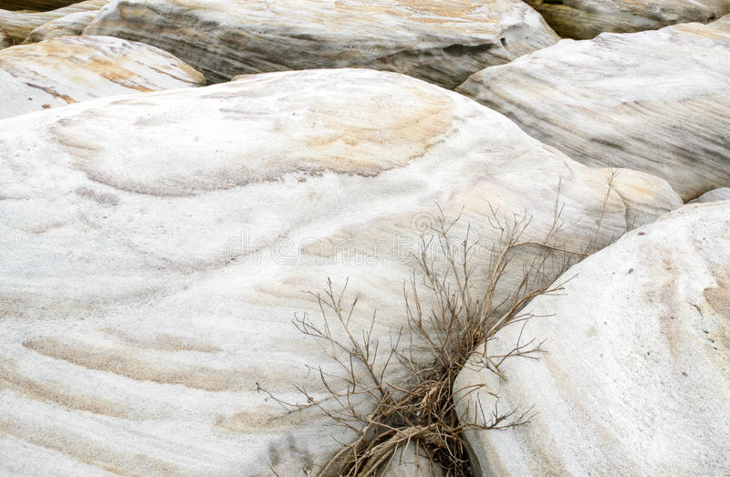 Rock texture abstract background with plant royalty free stock photos