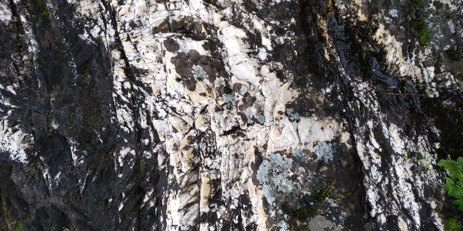 Rock texture with fungi and Leaves royalty free stock photo