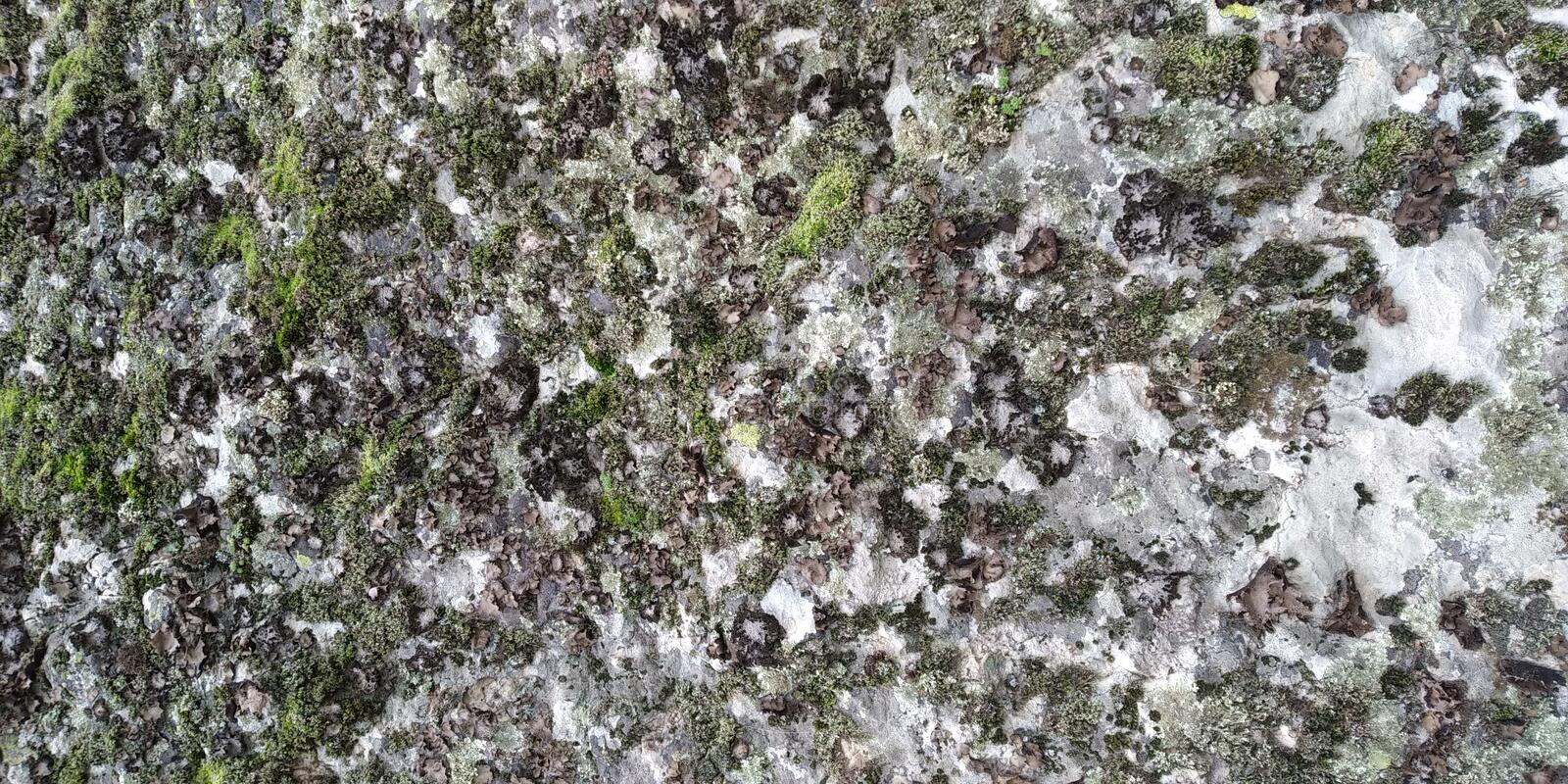 Rock texture with fungi and Moss royalty free stock photos