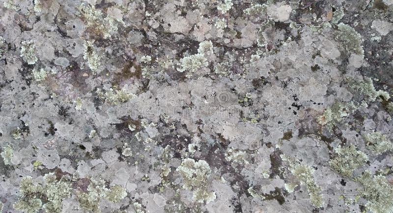 Rock texture with fungi. Real Rock Texture with fungi. Rocha. Cinza Verde Musgo. Compact Rock stock photo