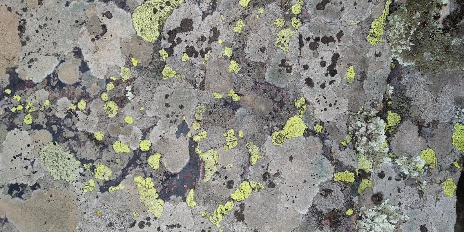 Rock texture with fungi. Real Stone Texture with fungi. Rocha. Cinza Verde Musgo. Compact Rock stock photo