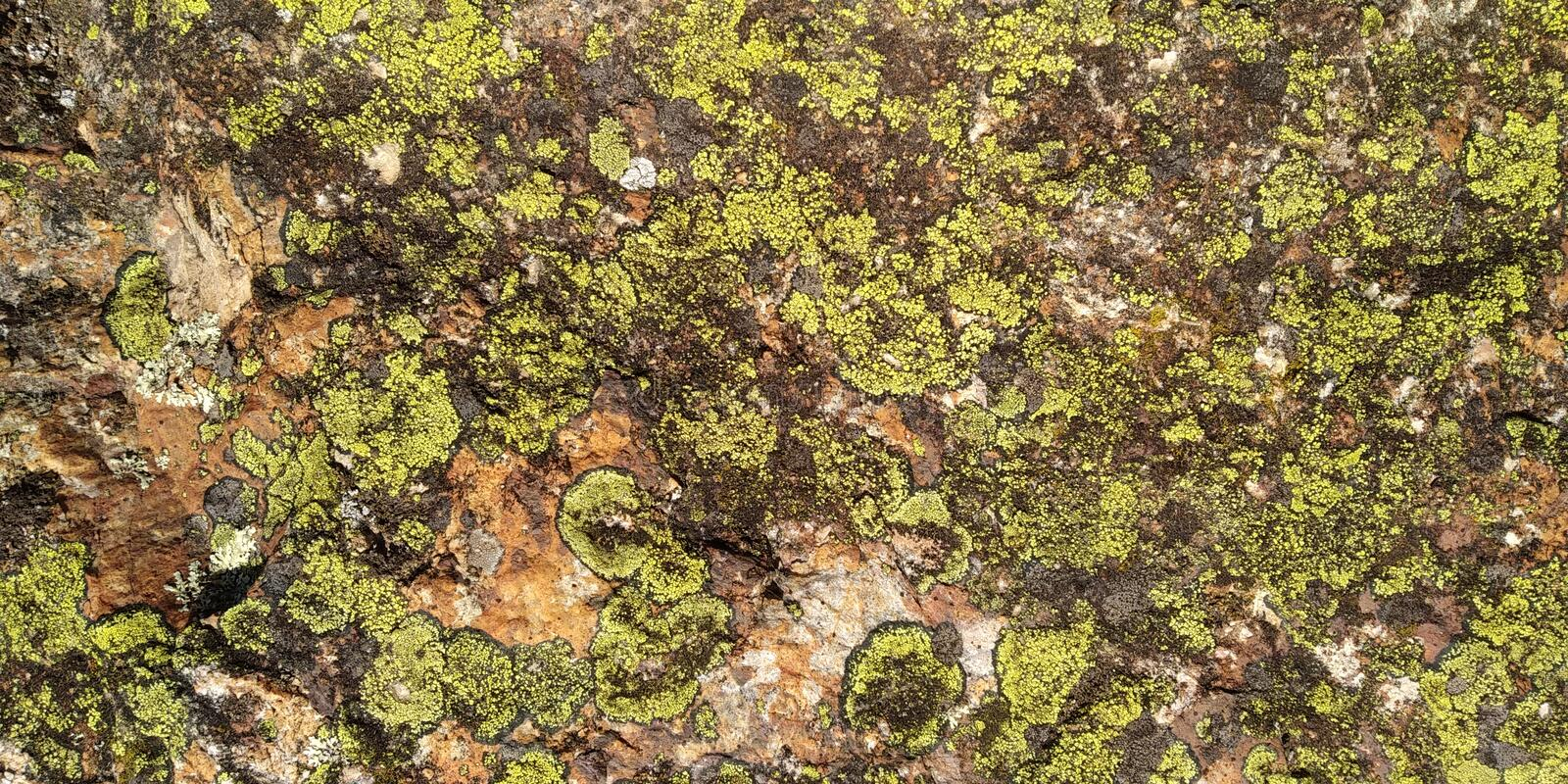 Rock texture with fungi. Real Stone Texture with fungi. Rocha. Cinza Verde Musgo. Compact Rock royalty free stock photo