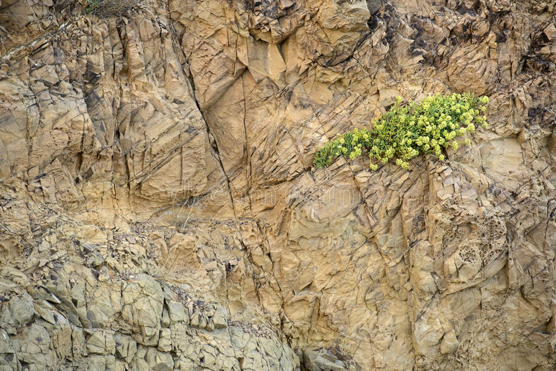 Rock texture. Natural rock texture with green plant stock images