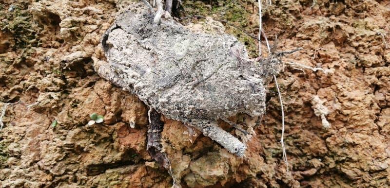 Rock tree geology autumn royalty free stock image