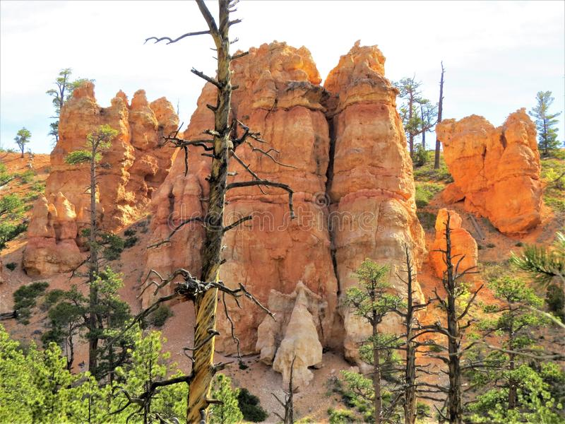 Rock, Tree, National Park, Canyon stock images