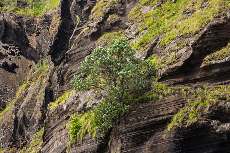 Rock wall above the Porto Capelas fishing port on Sao Miguel isl royalty free stock photography