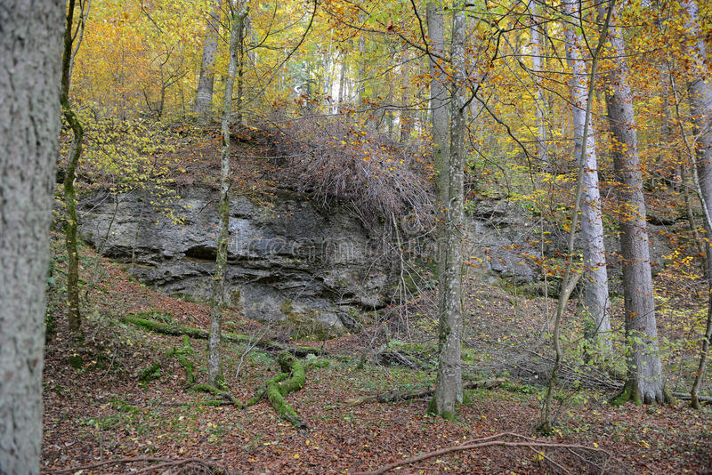 Rock wall of Maisinger Schlucht in Bavaria (Germany). Beech fore stock images