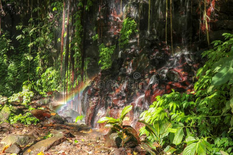 Rock wall overgrown with lush tropical vegetation. A waterfall running down a rock creates a rainbow over a boulder. Water flows stock image