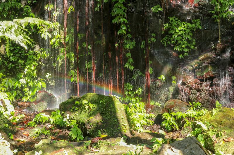 Rock wall overgrown with lush tropical vegetation. A waterfall running down a rock creates a rainbow over a boulder. Water flows stock photo