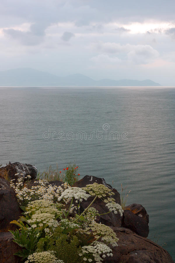 Rock wild flowers in coast of Lake of Sevan in Armenia. View of Lake of Sevan with wild flowers on the rock under dark clouds stock photo