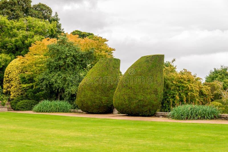 Rockerar den stora flaskan formade växter i landskap trädgårdar av Crathes, Skottland royaltyfria foton
