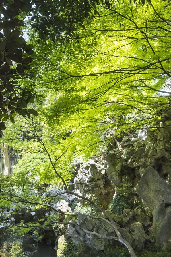 Rockery и зеленое дерево стоковые фотографии rf