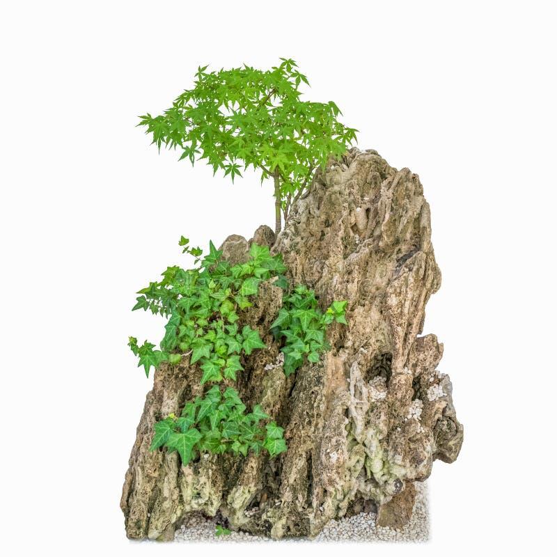 Rockery и зеленые растения стоковые изображения