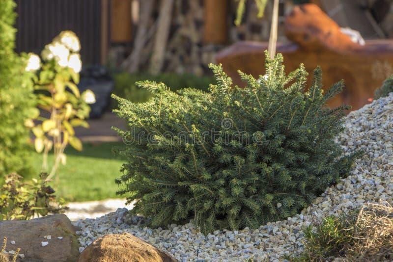 Rockery с большими камнями и различными заводами в саде стоковые изображения