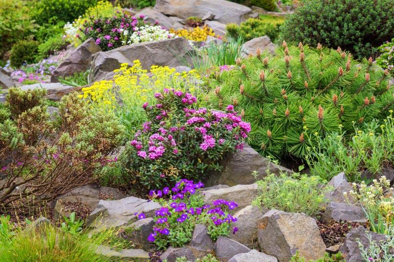 Rockery nel giardino con varietà di fiori e di piante differenti fotografia stock