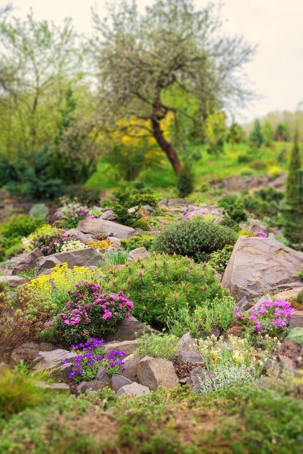 Rockery w ogródzie z kamieniami i rozmaitością różni kwiaty i rośliny, natura krajobraz, pionowo tło fotografia royalty free
