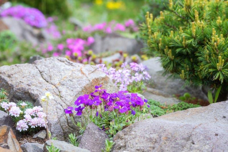 Rockery w ogródzie z rozmaitością różni kwiaty i rośliny obrazy stock