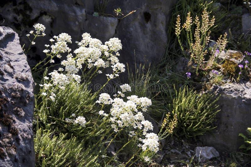 Rockery w wiośnie z kwitnąć rośliny Backlit fotografia obrazy stock
