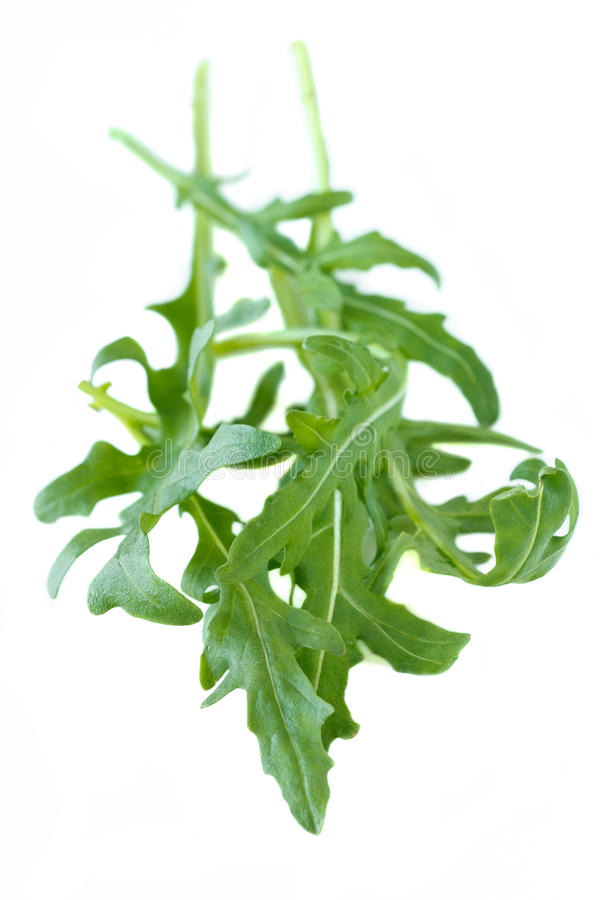 Rocket. Green rocket salad leaves isolated on white background royalty free stock photo
