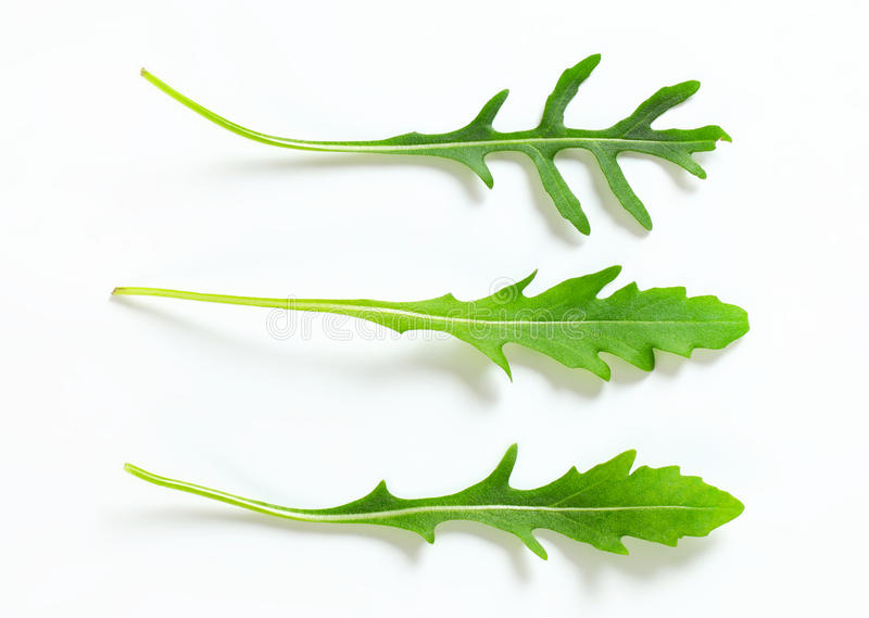 Rocket leaves. Closeup of three rocket leaves stock photography