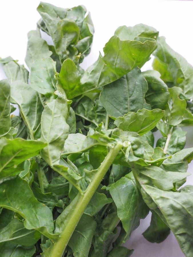 Rocket salad. Eruca sativa aka salad rocket, rucola, rucoli, rugula, colewort, roquette royalty free stock photos