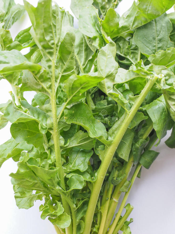 Rocket salad. Eruca sativa aka salad rocket, rucola, rucoli, rugula, colewort, roquette royalty free stock images