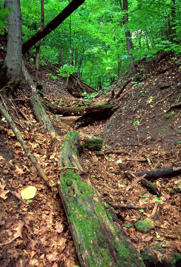 Rockford Rotary Forest Preserve Illinois. Deciduous forest scenery at Rockford Rotary Forest Preserve in northern Illinois stock photos