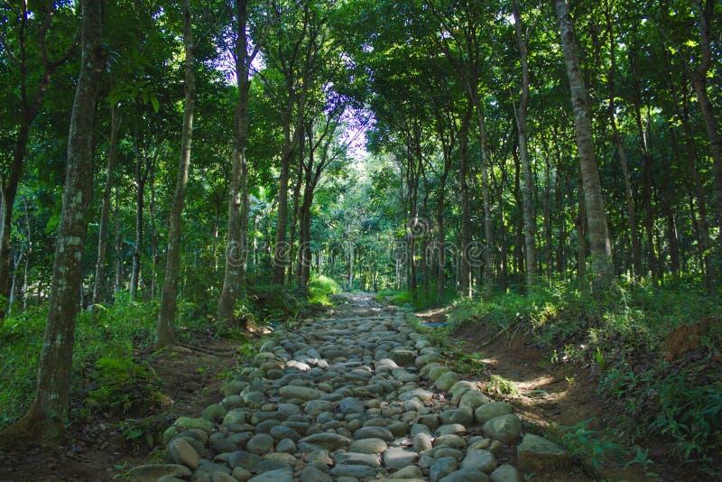 Rockowa ścieżka w lesie obrazy stock