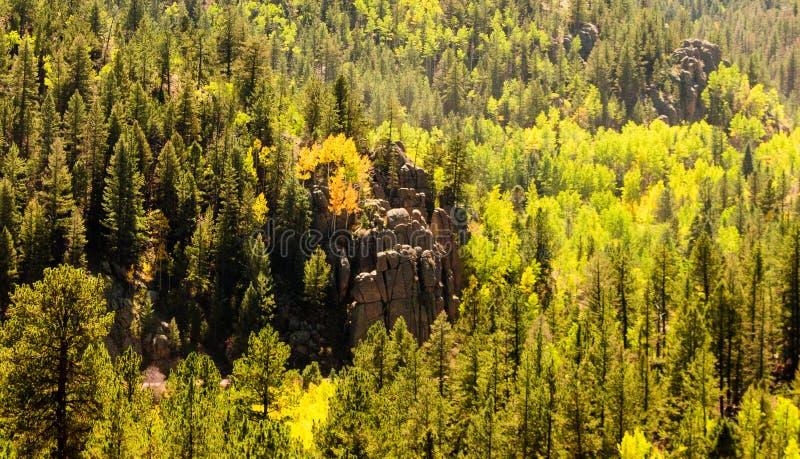 Rockowa formacja W lesie obrazy royalty free