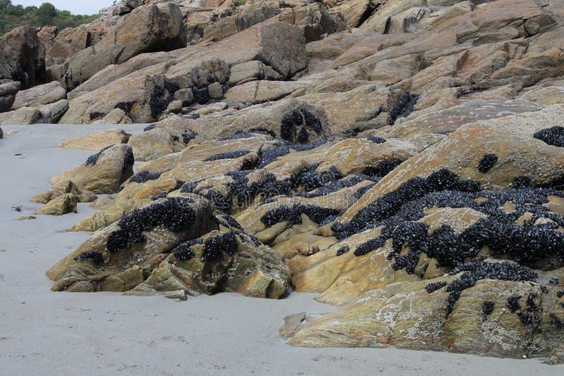 Rockowa formacja z Mussels, Brittany, Francja zdjęcie royalty free