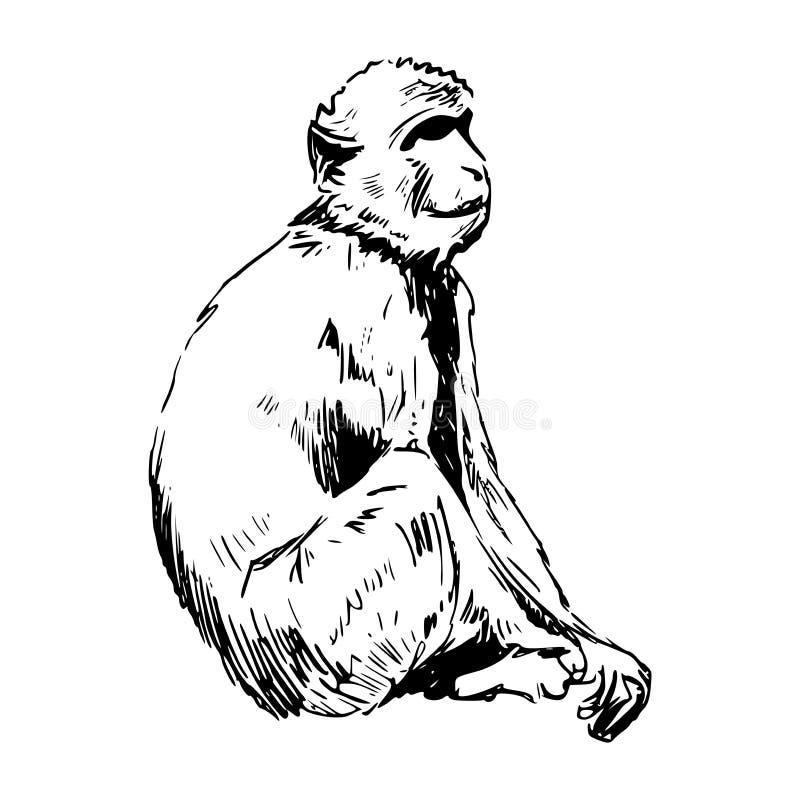 Rockowa małpa - Barbary małpa od Gibraltar ilustracji