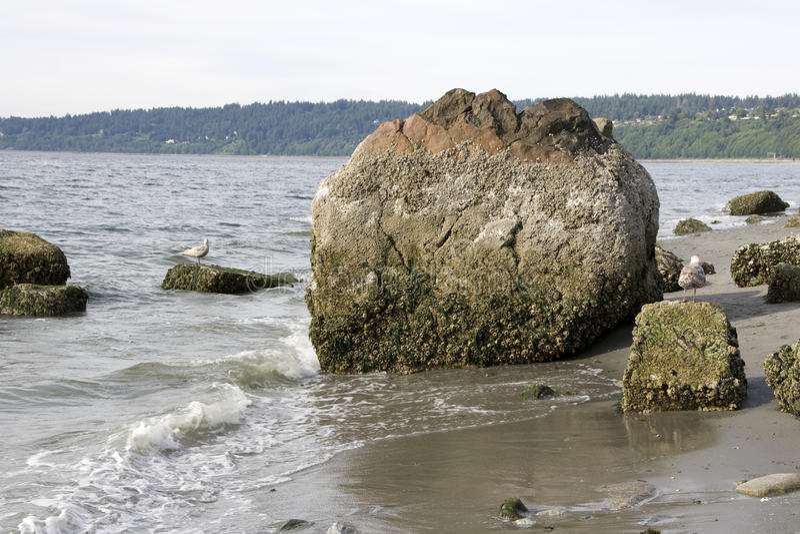 Rockowa plaża obraz royalty free