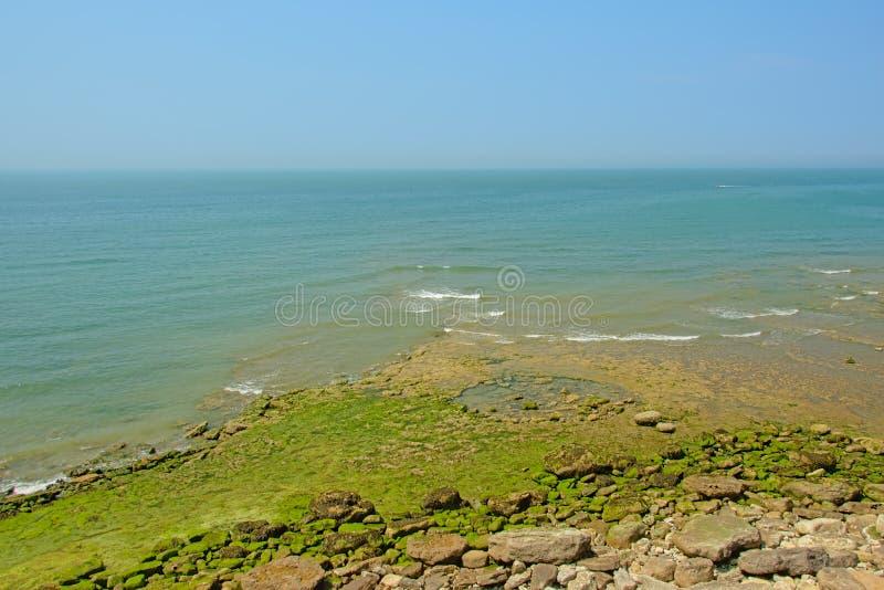 Rockowa plaża z zielonymi algami wzdłuż Opalowego kosztu Północny morze w Francja zdjęcia royalty free