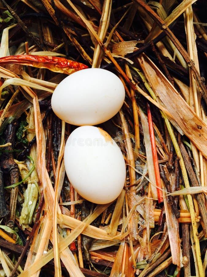 Rockowego gołębia jajko zdjęcie stock