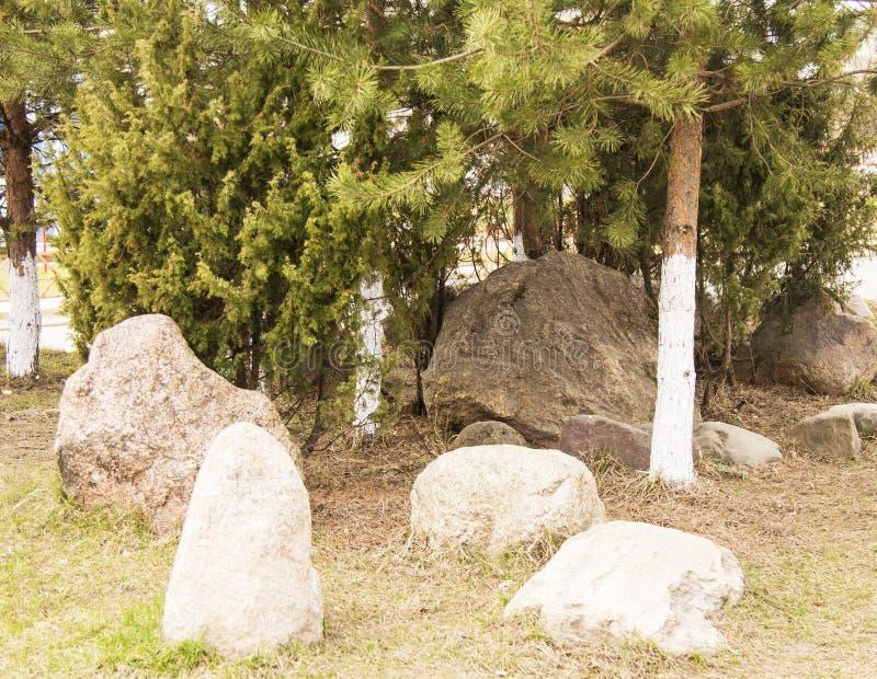 Rockowy ogród wśród sosen Wiosna w cit zdjęcie stock