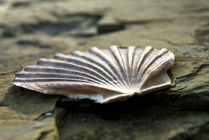 Download Rockowy seashell zdjęcie stock. Obraz złożonej z zaciemnia - 13332806