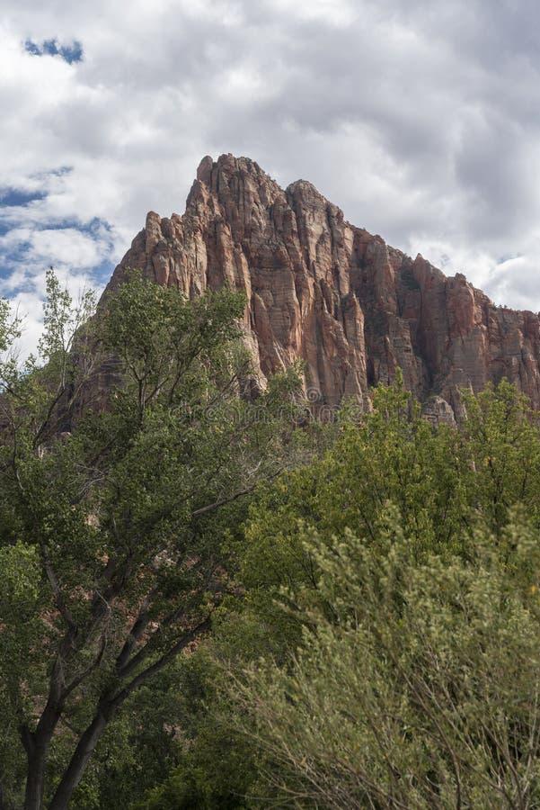 Rockowy struktury i drzew Zion park narodowy obraz stock