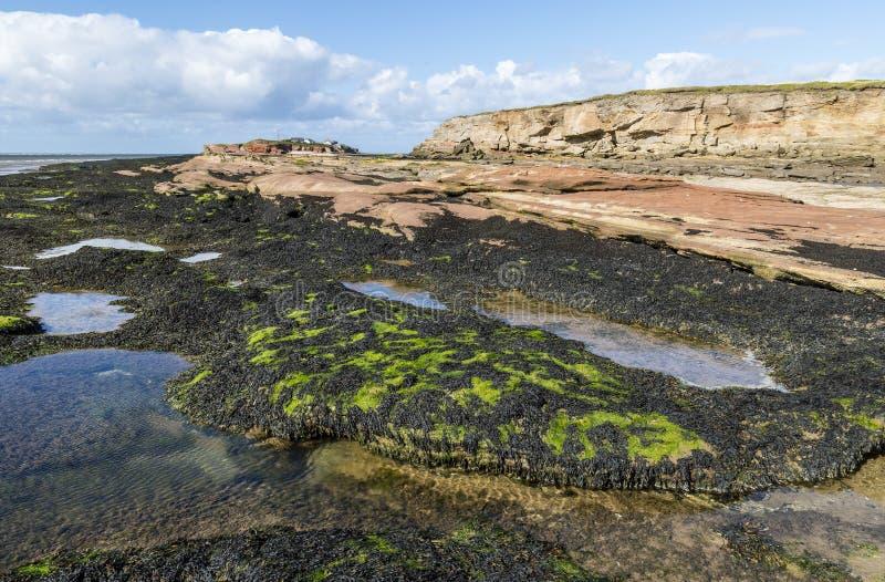 Rockpools和海草在中间Hilbre海岛, Wirral 免版税库存照片