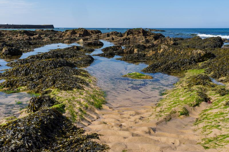 Rock pools on a seashore in Scotland royalty free stock photography