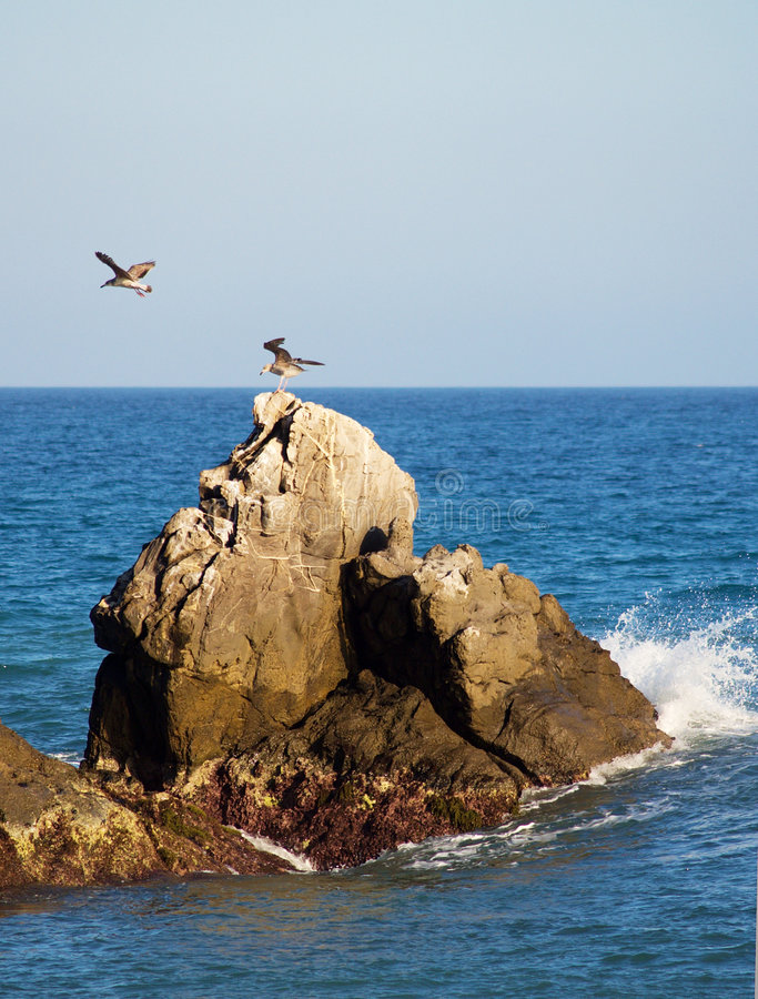 Free Rocks And Seagulls Royalty Free Stock Images - 4794059