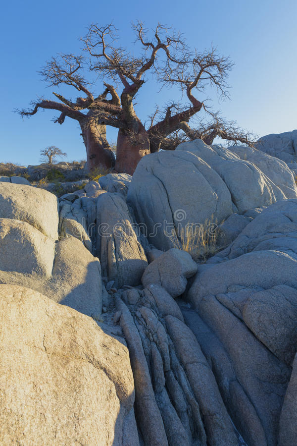 Rocks an baobab trees in last light of the day royalty free stock images