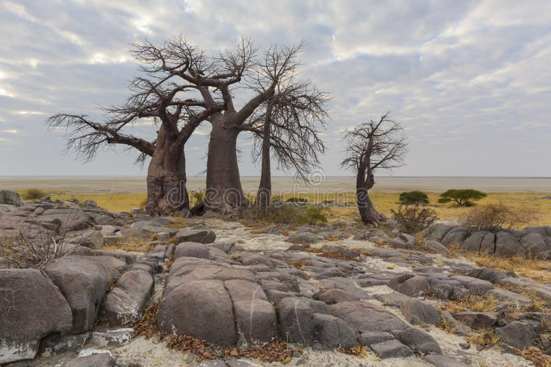 Rocks and baobab trees royalty free stock photography