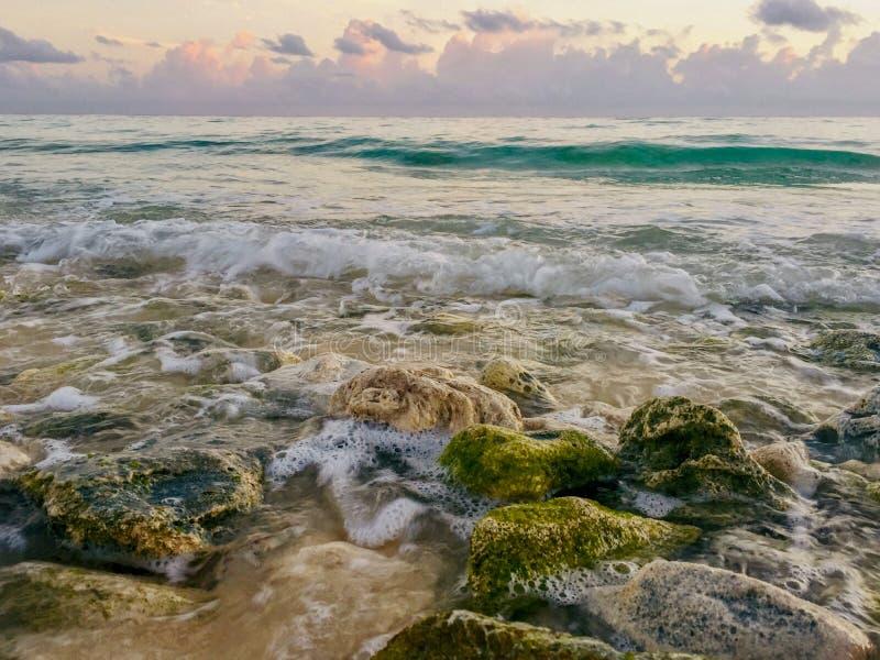 Rocks covered with algae on eroded beach at sunrise stock photo