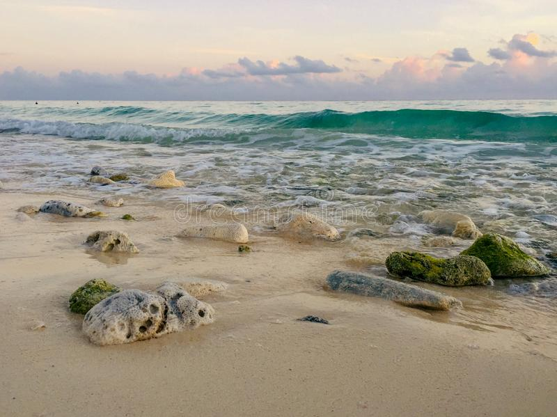 Rocks covered with algae on eroded beach at sunrise stock images