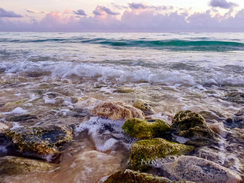 Rocks covered with algae on eroded beach at sunrise stock image