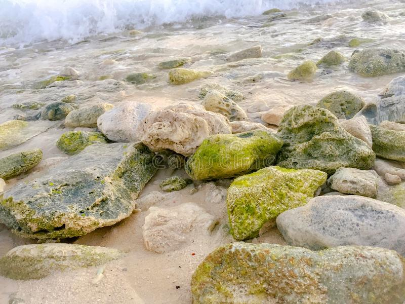 Rocks covered with algae on eroded beach at sunrise royalty free stock photography