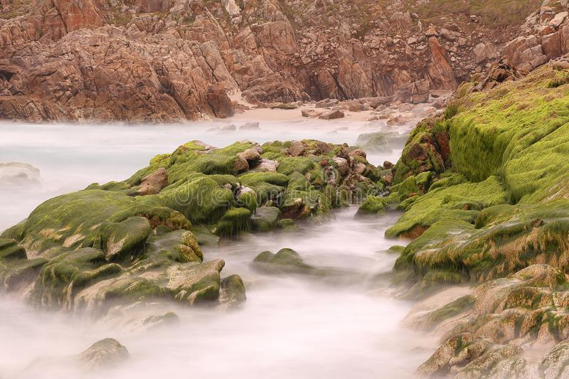ROCKS COVERED WITH GREEN ALGAE  , AND SMALL ROCK POOLS APPEAR AT LOW TIDE stock photos