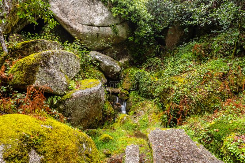 Rocks covered by green moss in the Peneda geres National Park forest, north of Portugal stock images